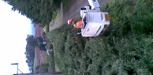 Power line clearing 10
