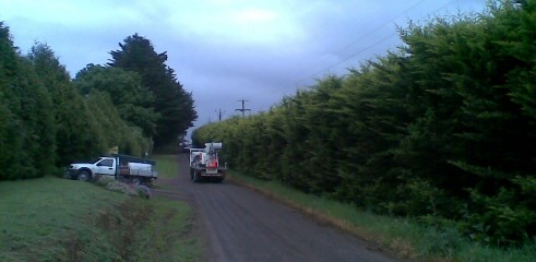 Power line clearing 6