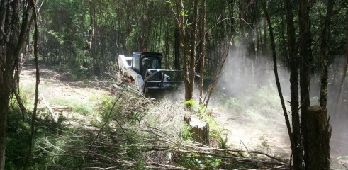 Scrub clearing (forestry mower) 3