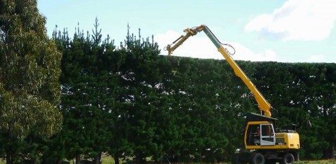 Shelterbelt and Hedge Trimming 1