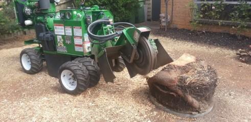 Stump grinding 5