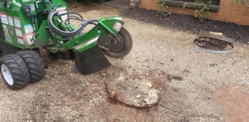Stump grinding 6