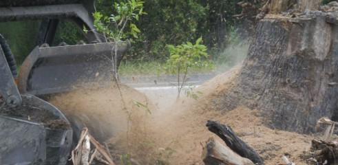 Stump Grinding 4