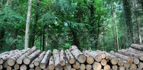 Timber Stacking 1