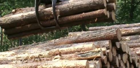 Timber Stacking 2
