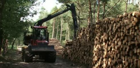 Timber Stacking 3