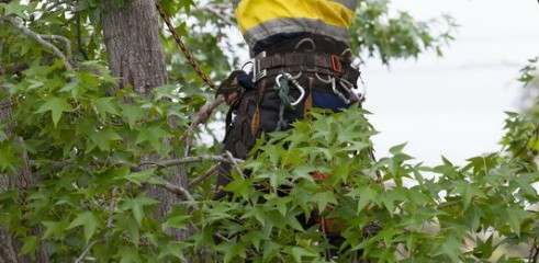 Tree Pruning Services Sydney - Prune or Trim Your Trees  1