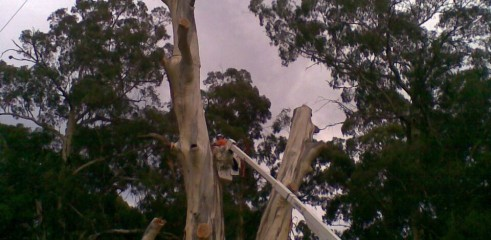 Tree removals and pruning 10