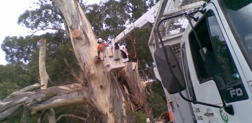 Tree removals and pruning 11