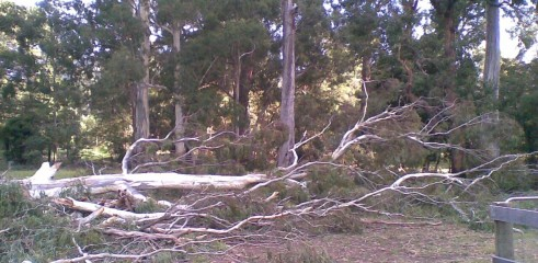 Tree removals and pruning 12