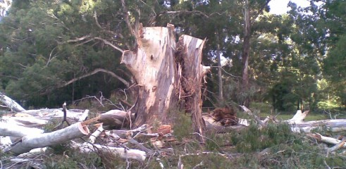 Tree removals and pruning 13