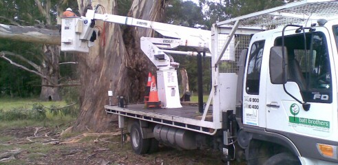 Tree removals and pruning 1