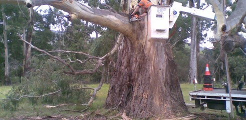 Tree removals and pruning 2