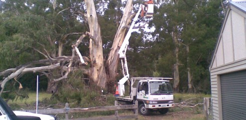 Tree removals and pruning 3