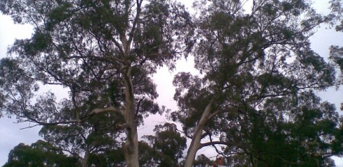 Tree removals and pruning 4