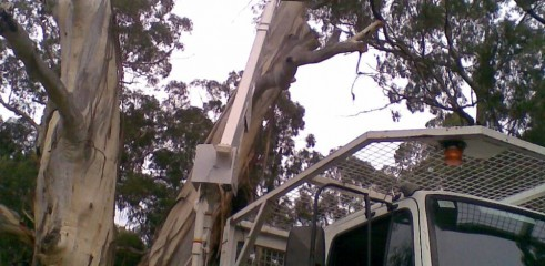 Tree removals and pruning 5