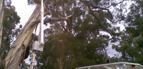 Tree removals and pruning 6