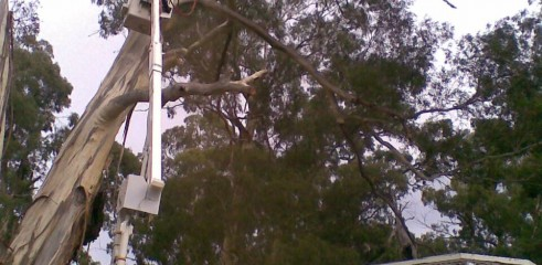 Tree removals and pruning 7