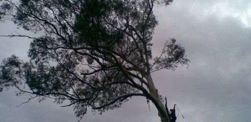Tree removals and pruning 8