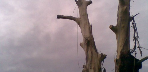 Tree removals and pruning 9