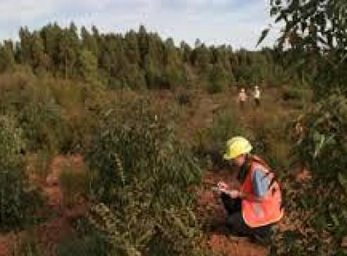 Tree Species Identification