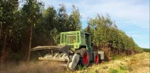 Vegetation Mulching 1