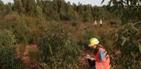 Weed Species Identification  1